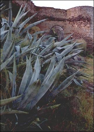 Portugal, Alentejo - Monsaraz, agaves grow outside the gates