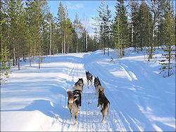 Travelogue Active Winter Vacation Ivalo, Finnish Lapland with 22 photos