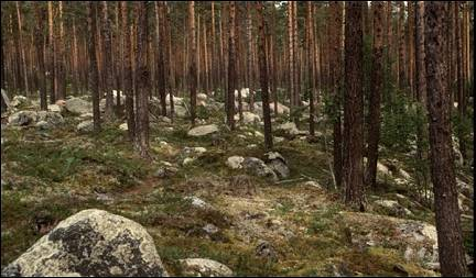 Sweden - Forest strewn with rocks