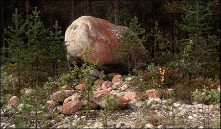 Sweden - Fir woods with enormous rocks