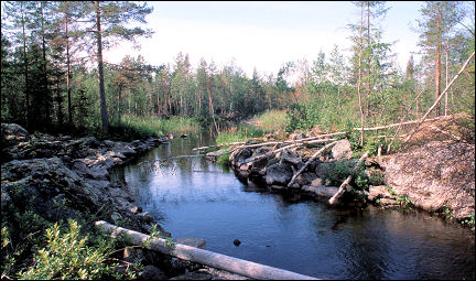 Sweden - The work of beavers
