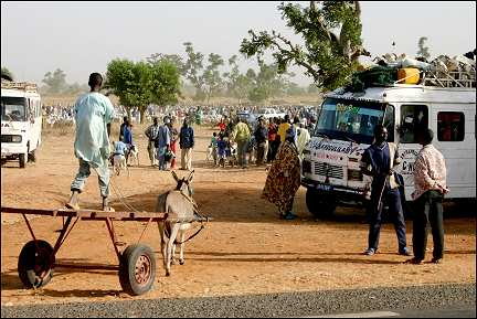 Senegal - Mbour, goats on car