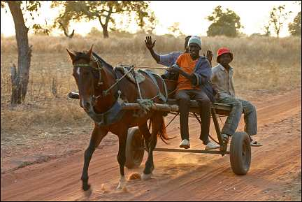 Senegal - Gouloumbou, horse and wagon with three boys