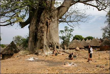 Senegal - Kedougou, visit to village with biggest baobab