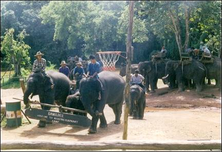 Thailand - Elephant training camp