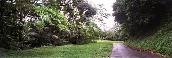 Trinidad and Tobago; - Road at Gilpin Trail
