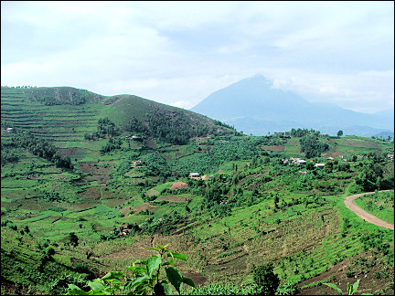 Uganda - Kisoro, terrace agriculture and in the distance volcanoes