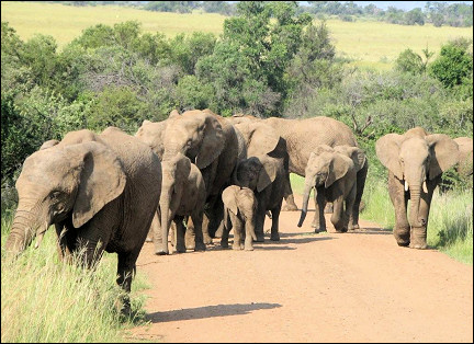 South Africa - Pilanesberg National Park, elephants