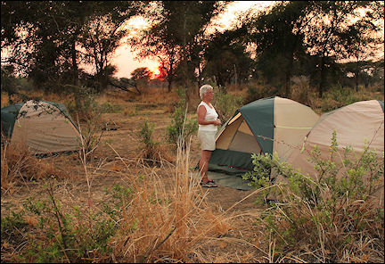 Zambia - Tents between mopane shrubs